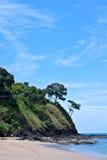 Bäume auf der Klippe Stockfotografie