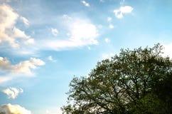 Bäume auf der Steigung lizenzfreie stockbilder
