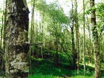 Bäume auf einem Abhang Lizenzfreies Stockfoto