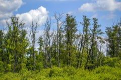Bäume auf einem blauen Hintergrund, getrocknete Bäume Stockfotos