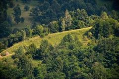 Bäume auf einem Hügel Stockbild