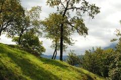 Bäume auf einem Hügel Stockfoto