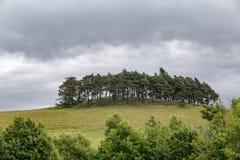 Bäume auf einem Hügel Stockfotografie