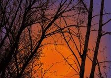 Bäume auf einem Hintergrundhimmel Stockfotografie