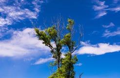 Bäume auf einem klaren blauen Himmel und einer weißen Wolke Stockfotos