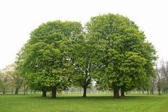 Bäume auf einem nebelhaften Morgen, England Lizenzfreie Stockfotos