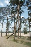 Bäume auf einem Sandantrieb Lizenzfreie Stockbilder