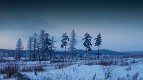 Bäume auf einem schneebedeckten Feld Stockfoto