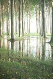 Bäume auf einer Baumfarm in Süd-Frankreich Stockbild