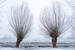 Bäume auf einer gefrorenen Wiese im Amsterdamse-Bos Stockfoto