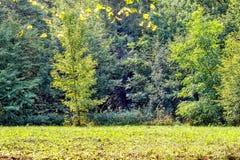 Bäume auf einer Lichtung im Spätholz lizenzfreie stockfotografie