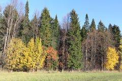 Bäume auf einer Lichtung im Spätholz Stockfotos