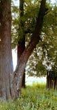 Bäume auf Feld, Sonnenglanz, Zaun Stockbilder