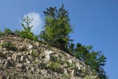 Bäume auf Felsen Stockbild