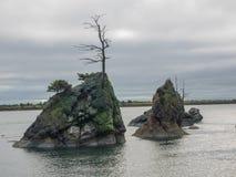 Bäume auf Felsenklippen in der Ozeanbucht Stockfotos