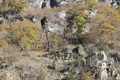 Bäume auf felsigem Berg in Georgia lizenzfreies stockfoto
