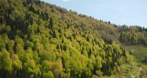 Bäume auf Gebirgsseite Stockfoto