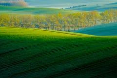 Bäume auf grünen gewellten Hügeln in Süd-Moray Lizenzfreie Stockbilder