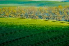 Bäume auf grünen gewellten Hügeln in Süd-Moray Lizenzfreies Stockfoto