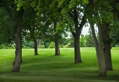 Bäume auf grasartiger Abdachung stockfoto