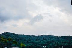 Bäume auf Hügel mit Wolken Stockfoto
