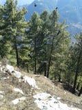 Bäume auf Hügeln Stockfotografie