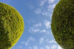 Bäume auf Himmelhintergrund Stockfoto