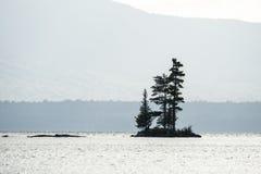 Bäume auf kleiner Insel Stockfoto
