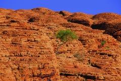Bäume auf Schluchtwand lizenzfreie stockfotografie