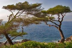 Bäume auf Seeküste Stockfotos