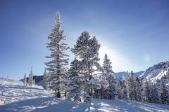 Bäume auf Ski Slopes With Sun Lizenzfreies Stockfoto