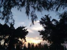 Bäume auf Sonnenuntergang stockbilder