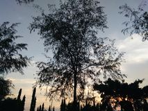 Bäume auf Sonnenuntergang Lizenzfreie Stockbilder