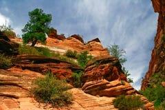 Bäume auf Steigungen von Zion Lizenzfreies Stockbild