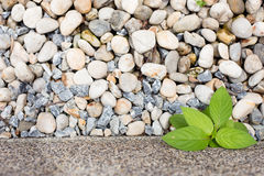 Bäume auf steinigem Boden Lizenzfreie Stockfotografie