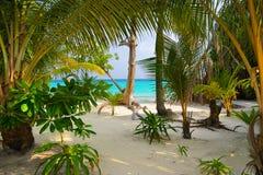 Bäume auf tropischem Strand Lizenzfreies Stockbild