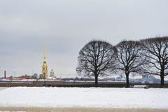 Bäume auf Vasilievski-Inselnahaufnahme stockbilder