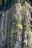 Bäume auf vertikalem Felsen Lizenzfreies Stockfoto