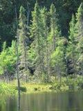 Bäume auf Wasser Lizenzfreie Stockfotografie