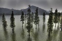 Bäume auf Wasser Stockfotografie