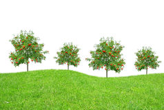 Bäume auf Wiese Stockbild