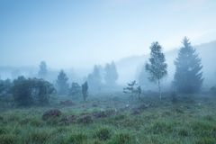 Bäume auf Wiese im dichten Nebel lizenzfreies stockbild