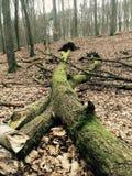 Bäume aus den Grund mitten in dem Wald Stockfotos