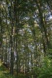 Bäume - bachorzec 2007 Stockfotografie