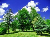 Bäume badeten im Sonnenlicht Park Lizenzfreie Stockfotografie
