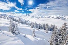 Bäume bedeckt durch frischen Schnee in Kitzbuhel-Skiort, Tyrolian-Alpen, Österreich Stockfotos