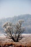 Bäume bedeckt im Reif Lizenzfreies Stockbild