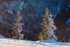 Bäume bedeckt im Schnee im Sonnenuntergang Stockbild