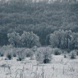 Bäume bedeckt mit Eis und Schnee Stunden und Landschaft Bäume im Cou Stockfotos
