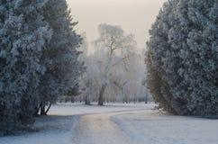 Bäume bedeckt mit Frost in einem schneebedeckten Wald Lizenzfreie Stockfotografie